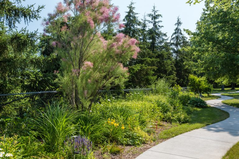 Garden areas along The Towne House community paths
